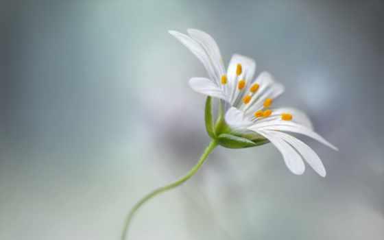 макро, flowers, цветы, photography, картинка,