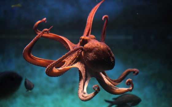 осьминога, осьминог, meduza, іо, известны, https, ученые, книги, стали,