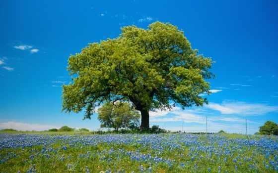 деревья, дерево, лес