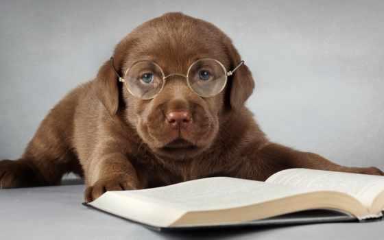 Собака в очках читает книгу