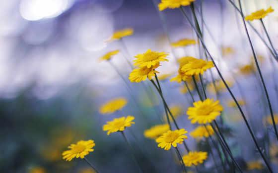 цветы, природа, макро Фон № 113913 разрешение 2560x1600