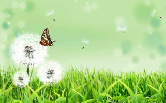 summer, трава, природа, цветы, одуванчики, бабочка,