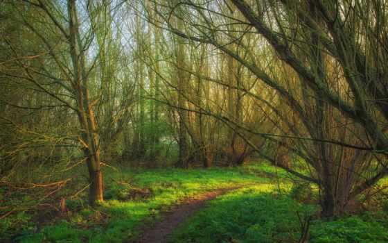 лес, wood, slayt