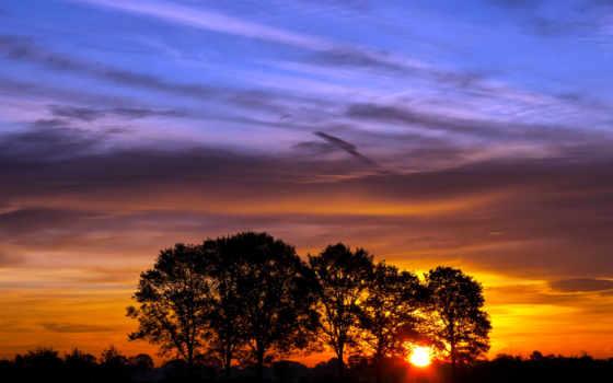 , лес, деревья, небо, закат, солнце,