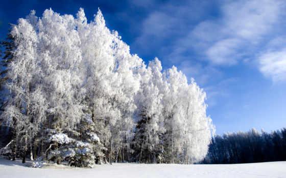 winter, природа, красивые, иний, года, природы, зимой, video, дерево, красивая, береза,