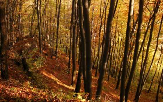 лес, trees, осень, молодой,