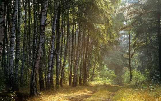 лес, russian, пользователя, яndex, коллекция, природа,