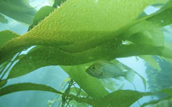 habitat, share, animals, пост, kelpfish, stock, natural, их, ozodbek, seguir,