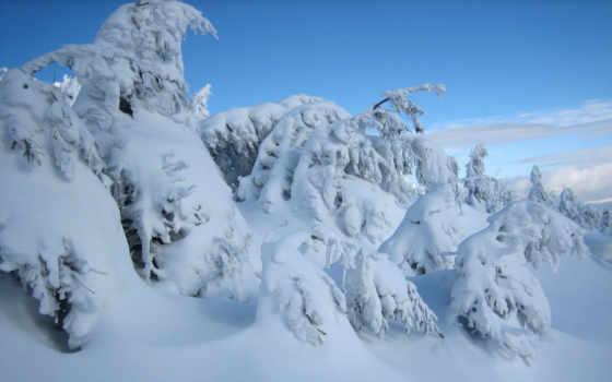 winter, time, собой, праздники, ждут, настроение, хороший, сказку, приносит, нетерпением, любят,