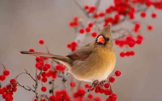 птица, весна, девушка, птичка, shirokoformatnyi, share, категория, рябина