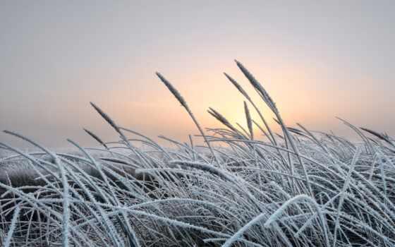 трава, иней, winter, день, природа, limonis, commonwealth,, озеро, кувшинка, рассвет