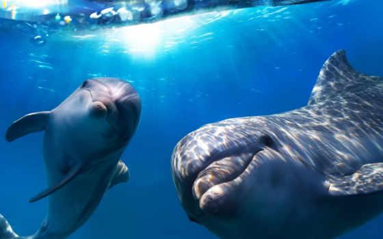 дельфины, дельфинов, pair Фон № 113343 разрешение 1920x1080