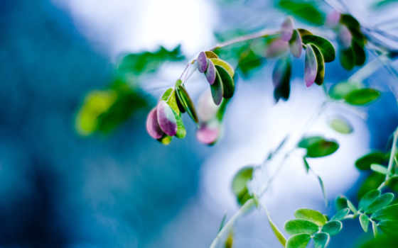 hojas, plantas, folhas, fundo, verdes, planta, fondos, pantalla, fondo, color,