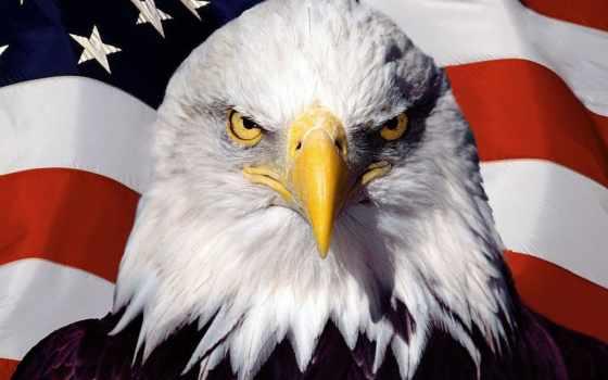 американский, ecran, drapeau