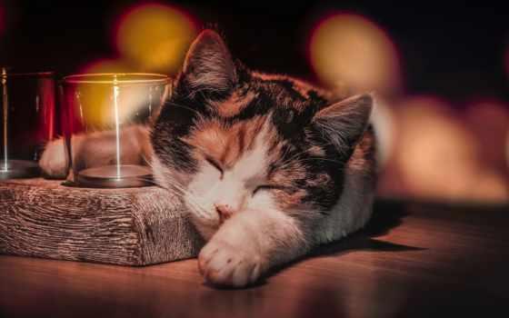 кошки, zhivotnye, коллекция, милые, спящие, звери, кот, бесплатные,