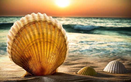 ракушки, природа, море, песок, full, широкоформатные, пейзажи -, морская,