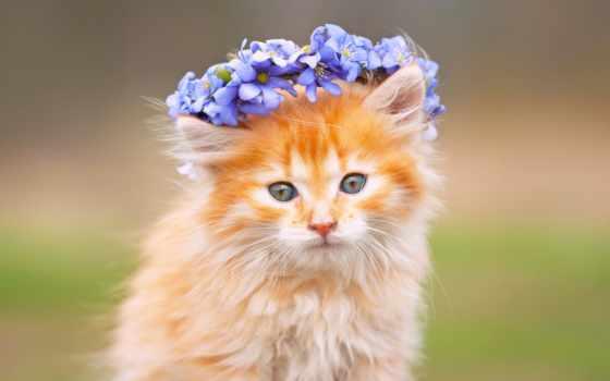 cvety, венок, кошки, коллекциях, яndex, пушистый, морда, коллекции, card,