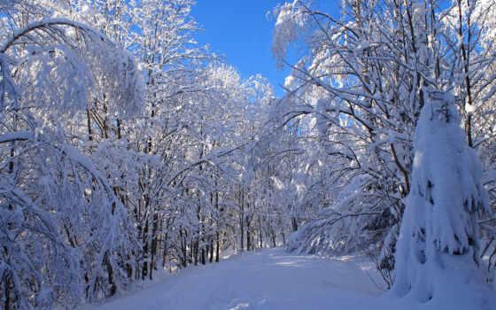 лес, снег, desktop, snowy, природа, explore,