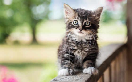 котята, кошки, котенок, кот, kittens, животных, taustakuva, котенка, котят, бесплатные,