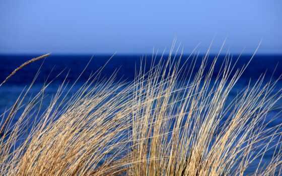 природа, трава, ocean, небо, water, море, горизонт