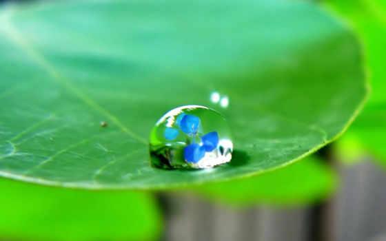 water, drop, drops