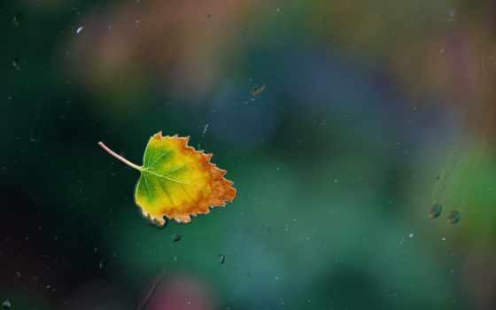 лист, осень, water