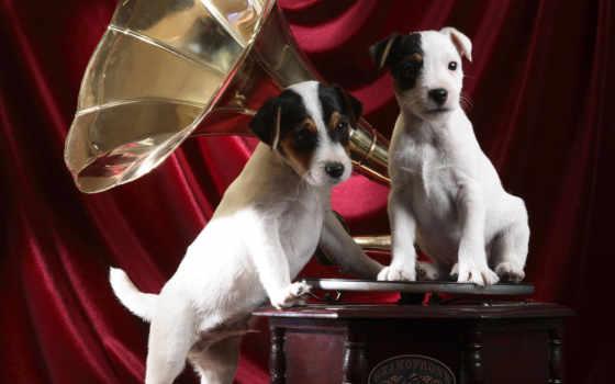 граммофон, pups, resolutions