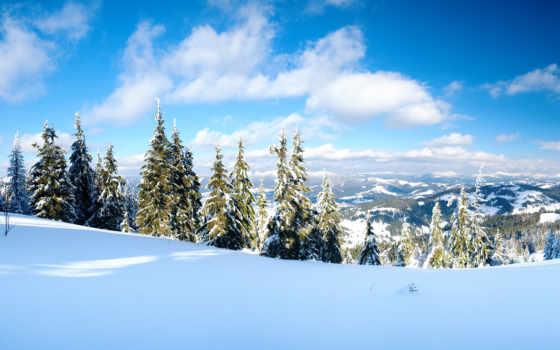 пейзажи -, классные, зимние, елки, снег, природа, широкоформатные, winter,