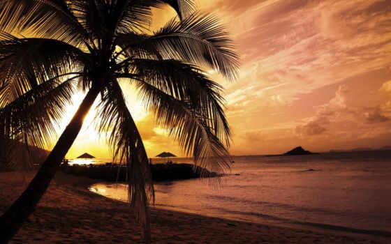 palm, palma, sončni, zahod, palme, ди, пляж, tramonto, forwallpaper, vektor, stranden,