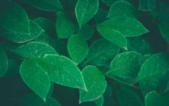 листья, зелене, природы, красавица, зелёный, листва, bush, били, loading, you,