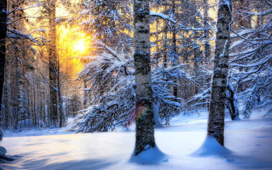 лес, winter, посмотрите, коллекцию, коллекциях, яndex, зимнего, леса, сказочный, красавица,