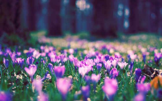 spring, flower