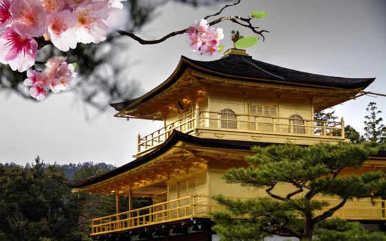 япония, сакуры, цветы