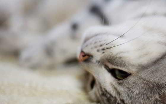 кошки, кот, кошек, мар, zhivotnye, метки, кб, котята, красивые, усы, столакошки,