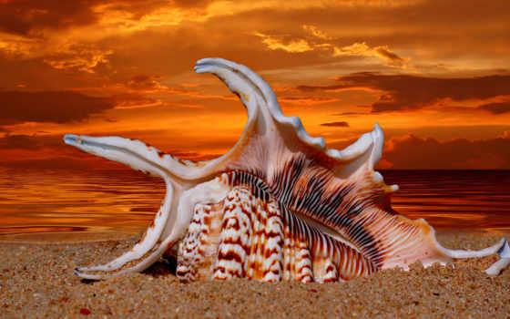 ракушки, природа, морская