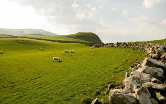 ireland, northern, sheep, овцы, оц, grazing, голова, торр,