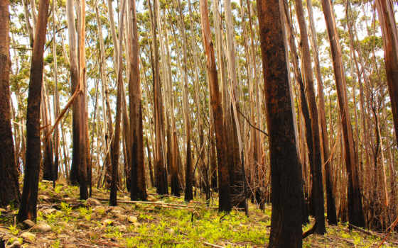 лес, deviantart, fiji, dromedary, art, sxyfrg, mt,