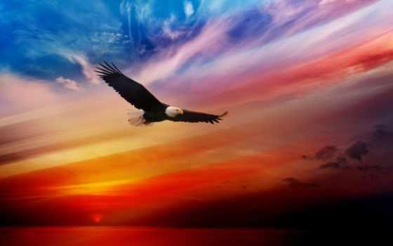 орлан, плакат, птицы, zhivotnye, заката, fone, them,