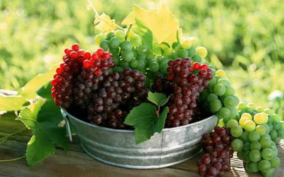 виноград, ягоды, ягод, фруктов, зооклубе, винограда,