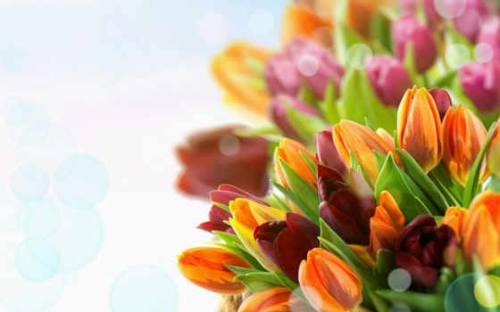 martha, поздравления, women, открытки, милые, анимации, праздником, день, красивые, рождения, поздравляем,