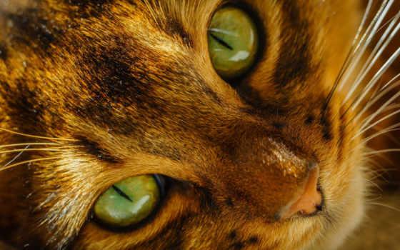 кот, red, свет