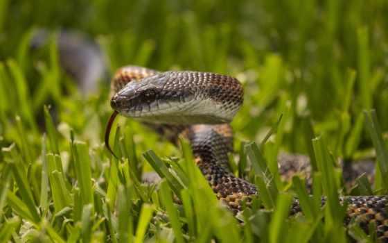 snake, змей, траве