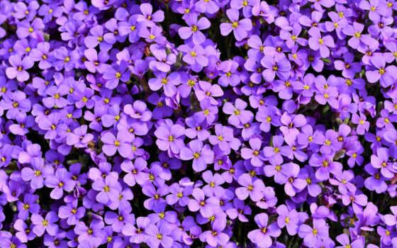 cvety, purple, цветы, балахон, nail, obriet, color, jersey, женский