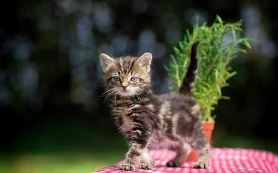 кот, left, котенок, animal, mushuklar, mac, random