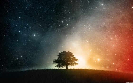 tree, artistic