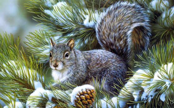pine, winter, белки
