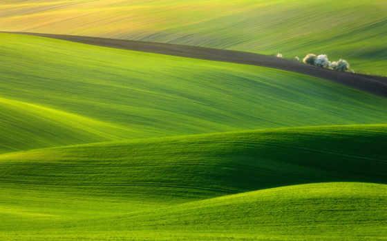 трава, холмы, природа
