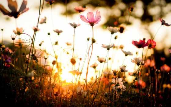 Цветы 100142