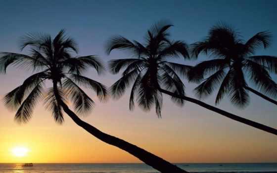пальмы, закат, небо, природа, sun, море,
