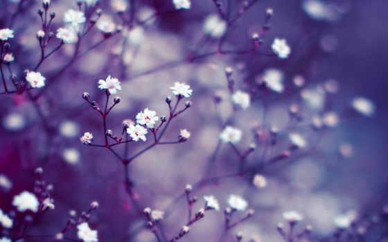 cvety, макро, размытость, ветки, бутоны, сиреневый, широкоформатные,